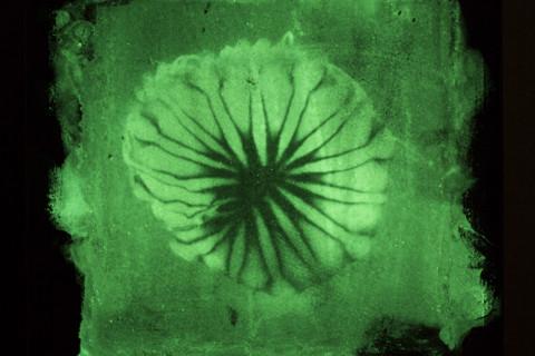 Fosfografías Medusas